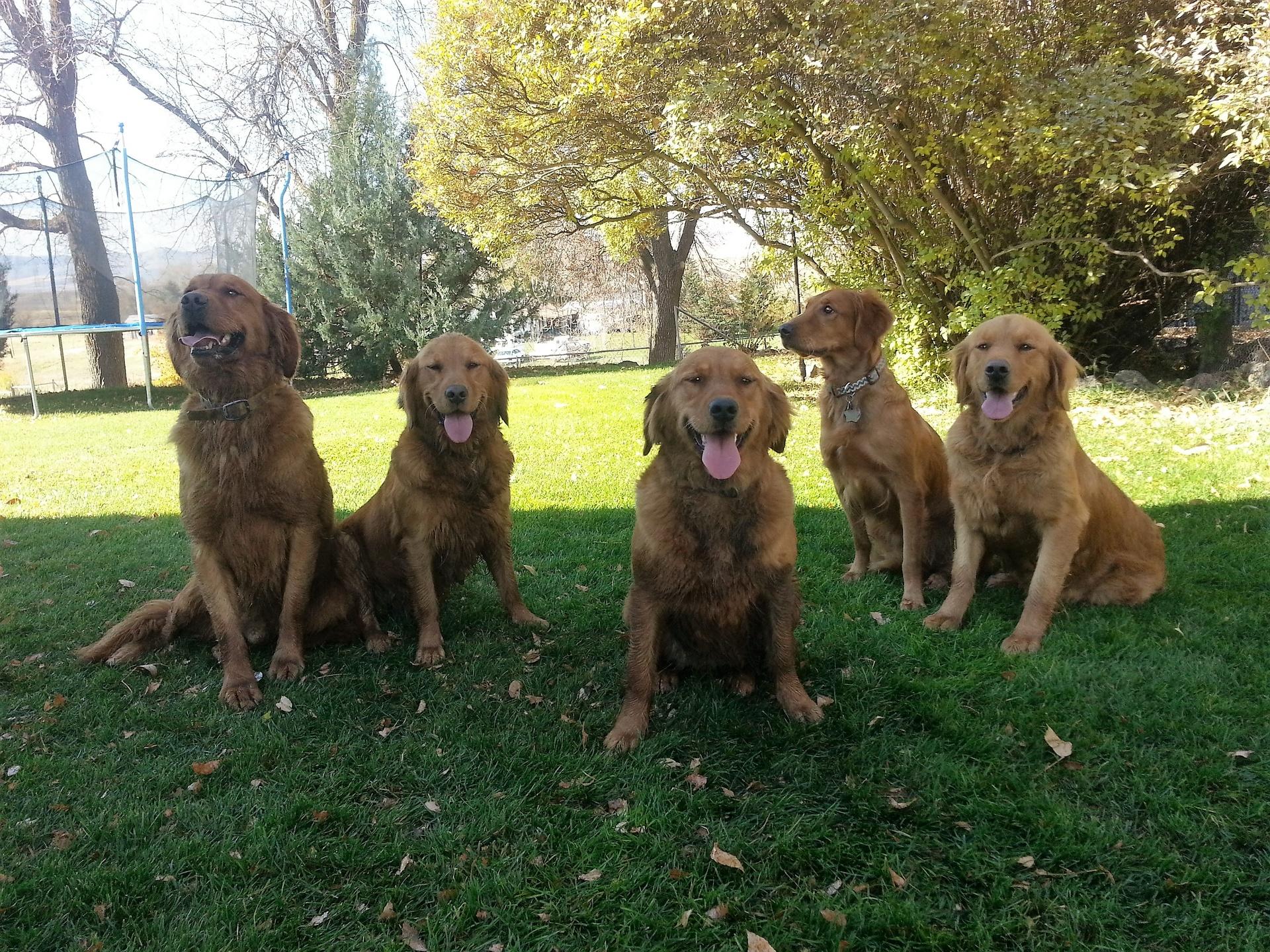Rusty, Strawberry, Lady, Roux, & Alice