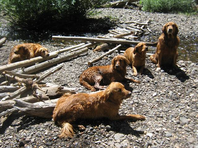 Our Golden's!